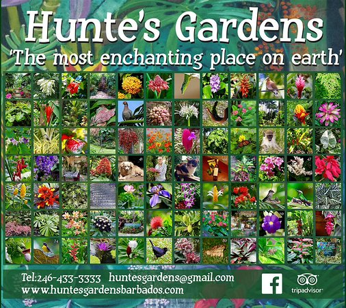 Hunte's Gardens: Match the numbers on the board with the numbers on the leaflet you will get when visiting