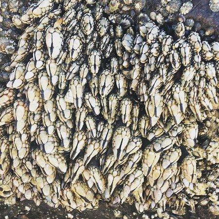 Yachats coastline: Tide pooling