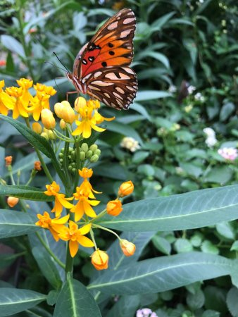 Westford, MA: The Butterfly Place