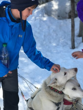 Snowy Owl Sled Dog Tours照片