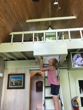 Turpentine Creek Overnight Lodging: Treehouse Loft (bathroom Is Behind Sliding  Door Behind Ladder)
