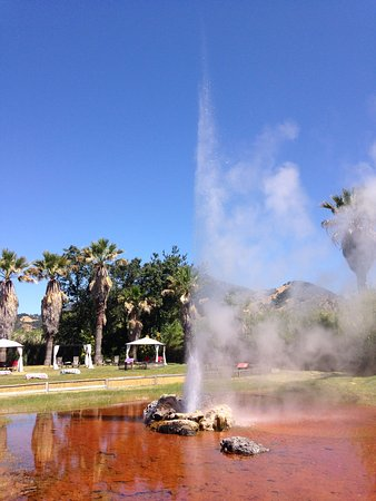 Calistoga, CA: Old Faithful Geyser of California erupting