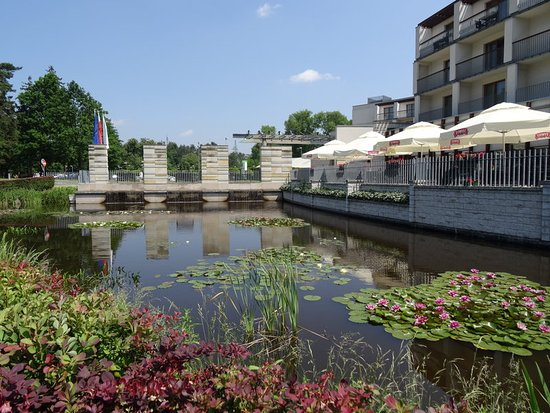 Holiday Inn Warsaw - Jozefow: Spectate nature