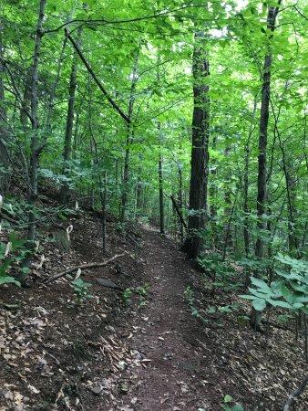 Liberty, Estado de Nueva York: through the woods