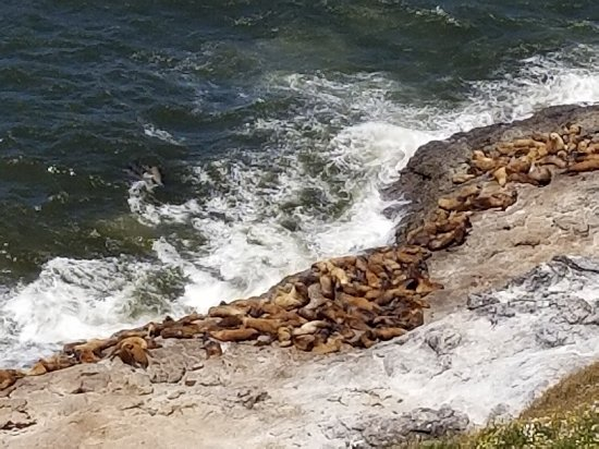 Florence, OR: Love the sea lions