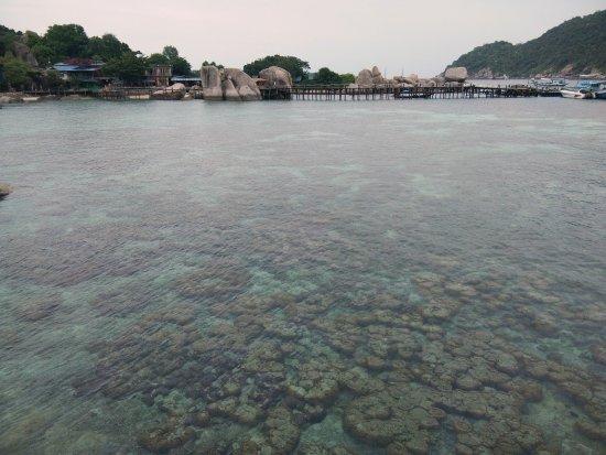 Koh Nang Yuan: IMG_25600720_161331_large.jpg