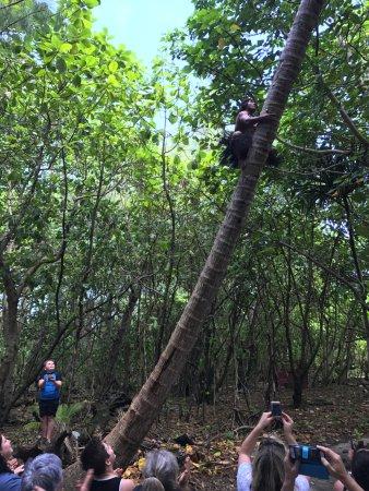 Muri, หมู่เกาะคุก: Tree climbing show with Captain Fabulous