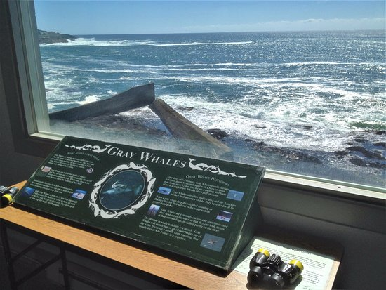 Depoe Bay, OR: Gray Whale info at the Whale Watching Center - Depot Bay, Oregon
