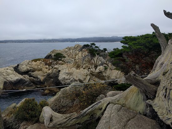 Point Lobos State Reserve: IMG_20170720_120422_large.jpg