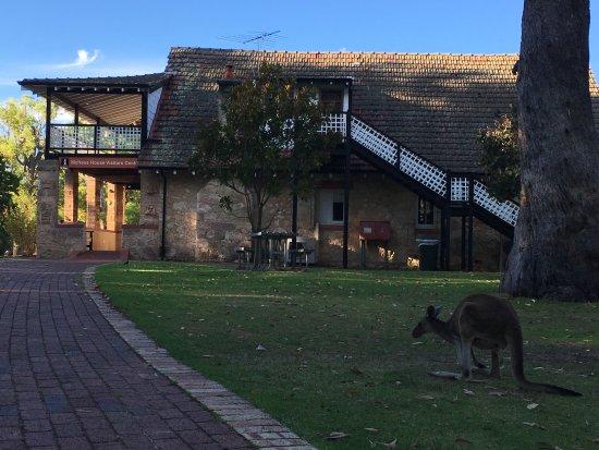 Yanchep, Australia: Kangaroo