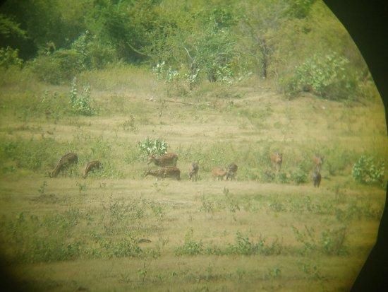 Hambantota, سريلانكا: 20170712_132846_large.jpg