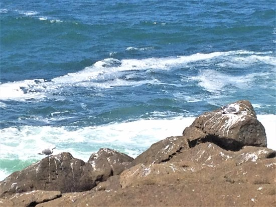Depoe Bay, OR: Seagulls nesting on the rocks above ocean waves