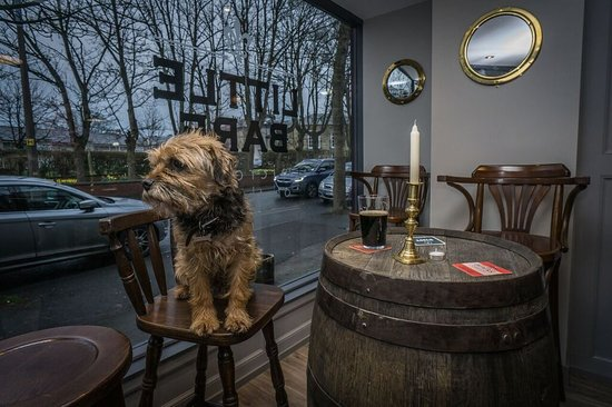 Morecambe, UK: Meet Archie our pub dog.