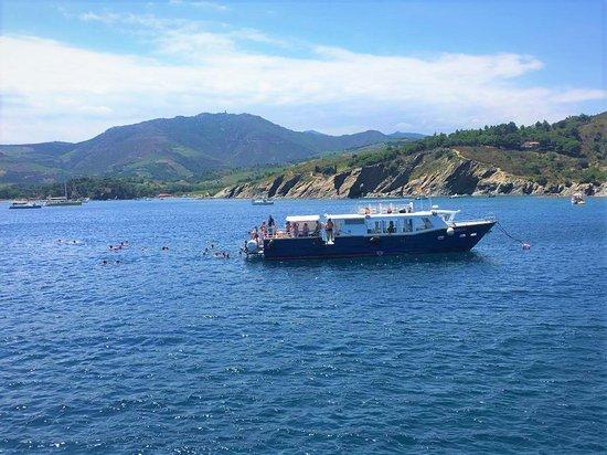 Saint-Cyprien, France: Baignade en baie de Paulilles
