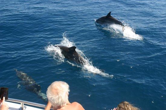 Saint-Cyprien, France: Découverte du grand dauphin juin 2017