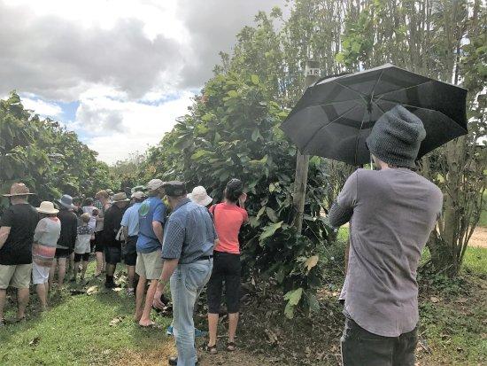 Mission Beach, Australia: Tour of the Plantation.