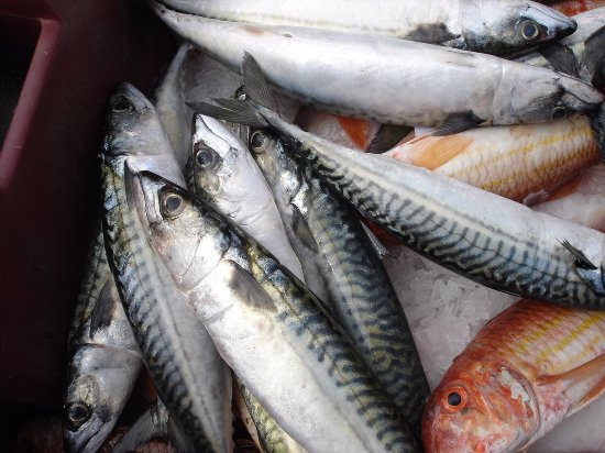 Percy's Restaurant: Mackerel & red mullet from the daily fish auctions at Looe