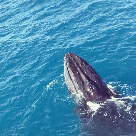 خليج هيرفي, أستراليا: photo0.jpg