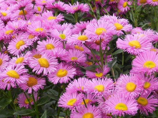 Incroyable Duthie Park Winter Gardens: Beautiful Flowers