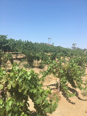 Temecula Valley Jeep Amp Wine Tours Californien Anmeldelser