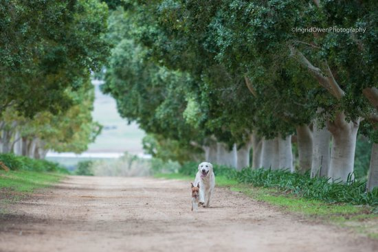 Citrusdal, Sudáfrica: Pet friendly and beautiful places to run the dogs