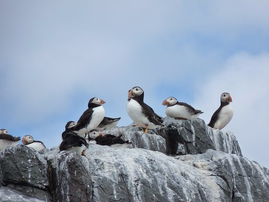 Seahouses, UK: Farne Island Puffins