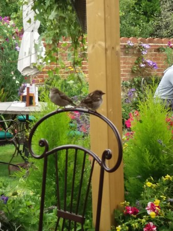 Alfriston, UK: Delightful garden for lunch