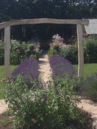 Landford, UK: Memories of Walking through the Lavender