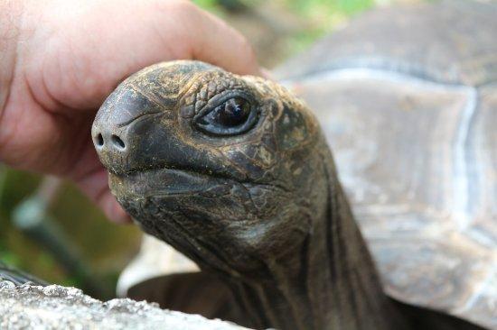Mahe Island, Seychelles: Turtle