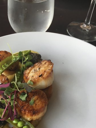 Ventnor City, NJ: Scallops over pork belly.
