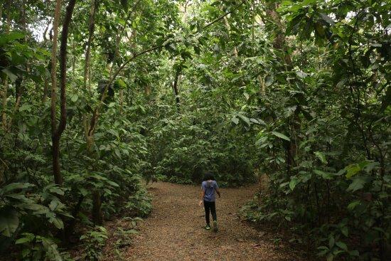La Mesa Eco Park: mini forest area