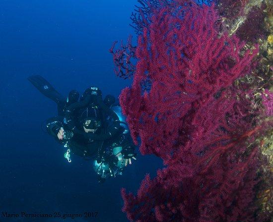 Mistral Diving Center