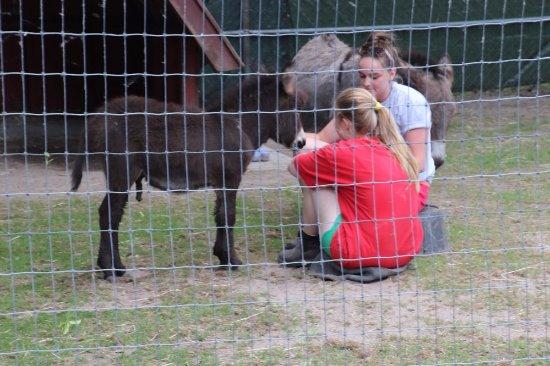 เซนต์แคทเทอรีนส์, แคนาดา: People from this place taking care of animals