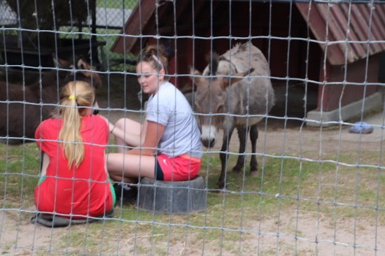 St. Catharines, Canada: More about taking care of animals