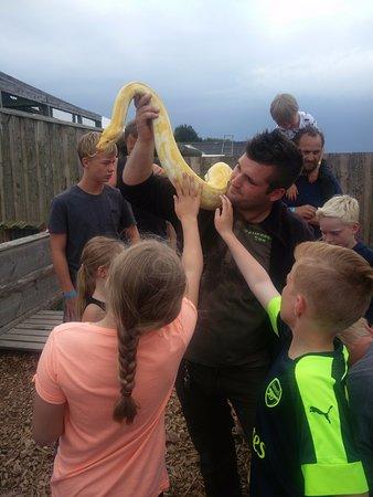 Eskilstrup, Dänemark: Petting a snake