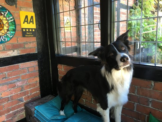 Horley, UK: Monty, awaits guest arrivals, wanting to know if they would like to play