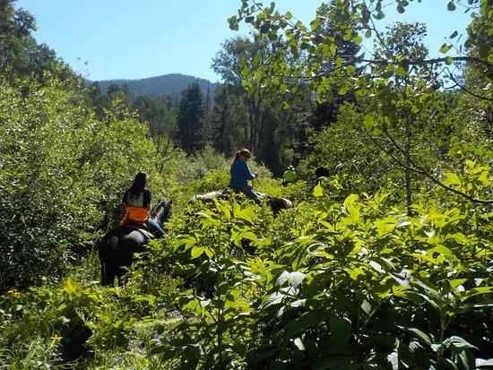 Pagosa Springs, CO: photo5.jpg