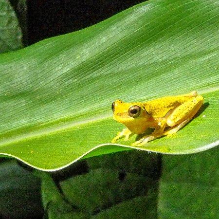 Costa Rica Jade Tours 사진