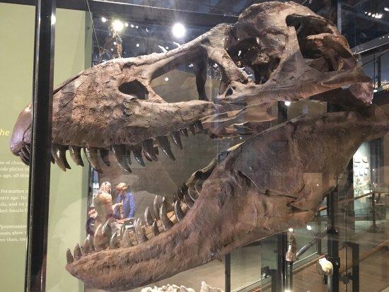 Natural History Museum Utah Vikings