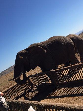 Mkuze, South Africa: photo2.jpg
