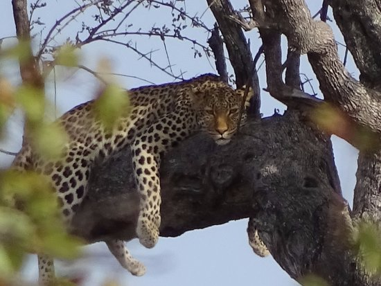 Balule Nature Reserve, Sudafrica: on the game drive