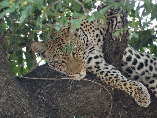 Balule Nature Reserve, Sudafrica: safari