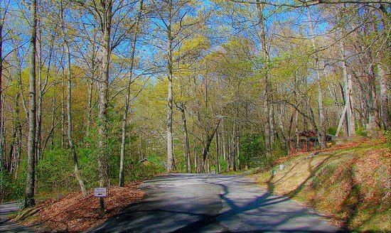Brevard, NC: Our 14 wooded acres in Springtime