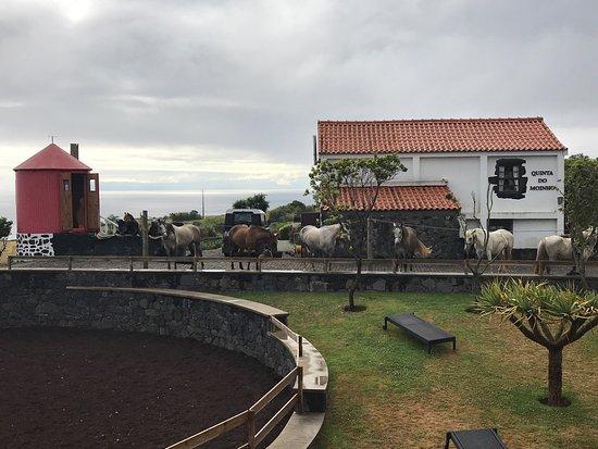 Cedros, Portugal: photo0.jpg