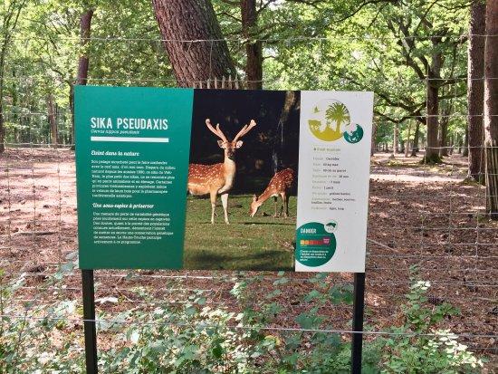 Zone d 39 levage pas zoo photo de reserve zoologique de la for Zoo haute touche