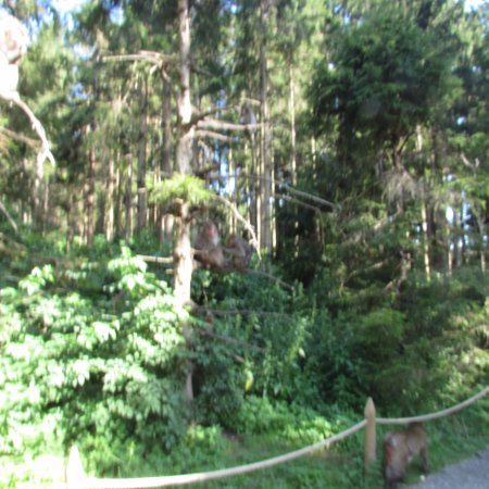 Abenteuer Affenberg tt.: parco scimmie