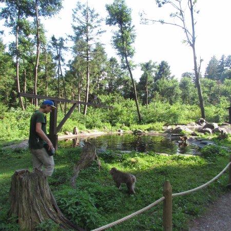 Landskron, Austria: parco scimmie