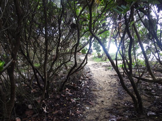 Managua Department, Nicaragua: Camino interno en Little Corn Island