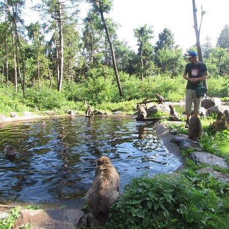 Abenteuer Affenberg tt.: scimmie in piscina