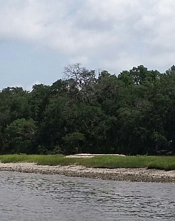 Fernandina Beach, FL: ancient oyster shell midden exposed, white